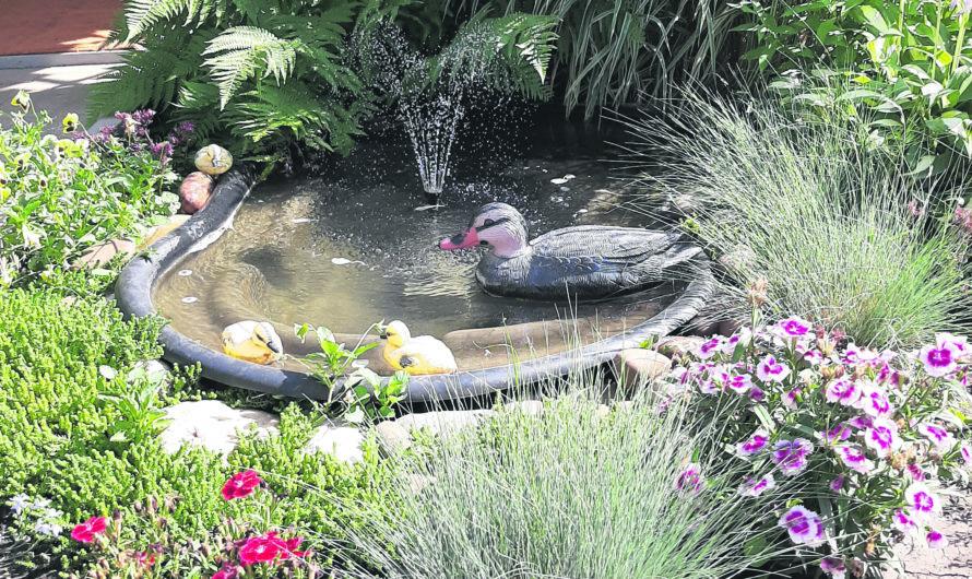 И пруд во дворе…
