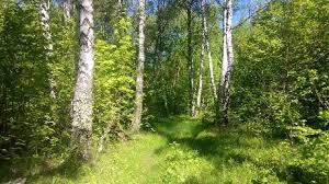 Чтобы леса жили