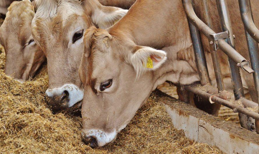 Поголовье скота увеличилось