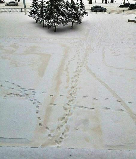 В Бугурусланском районе выпал снег серо-жёлтого цвета из-за песчаной бури в Южном Казахстане