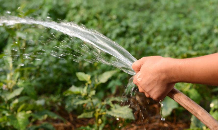 Воды хватает не всем…