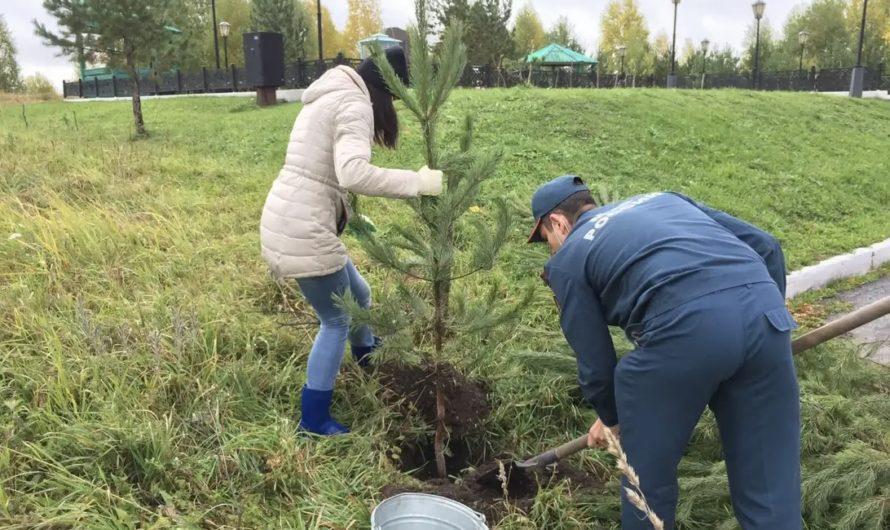 Посади саженец, сохрани лес
